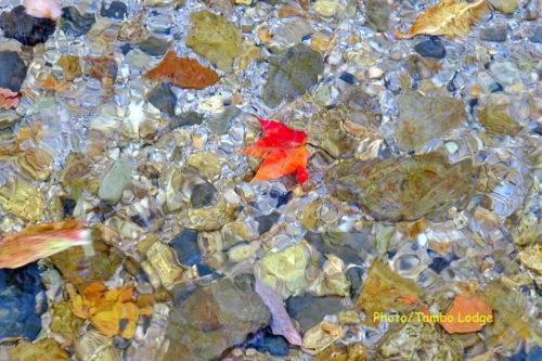 紅葉、最高に綺麗です