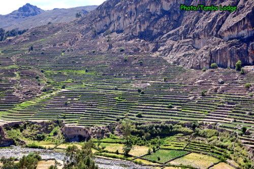 Andamarca村の千枚畑