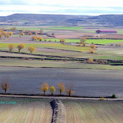グルテンフリーの嘘、本当(8)古代小麦の話