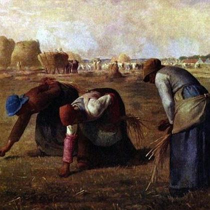 グルテンフリーの嘘、本当(9)現代の小麦(3)小麦の魂胆