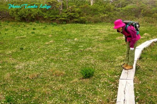 花咲く田代山へ登る