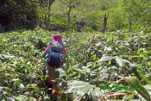 緑の魔境「三本槍岳」へ登る