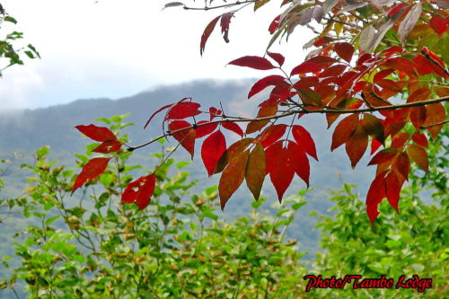 会津磐梯山に登る