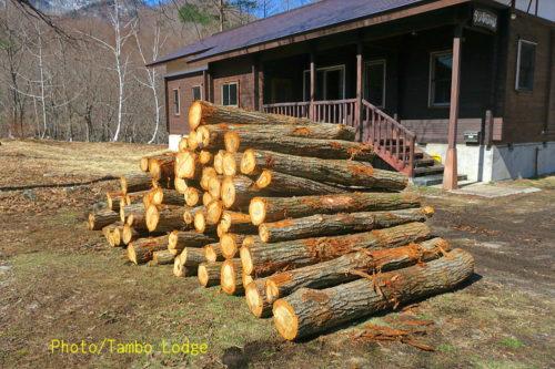 薪用の原木が到着