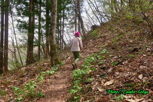 里山の「愛宕山」に登る