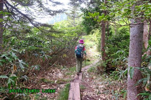 秋の田代山に登る