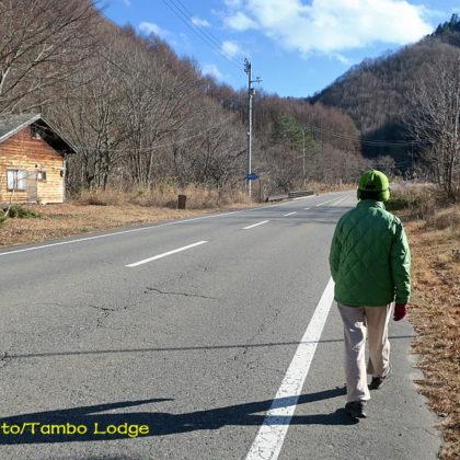 冬枯れの散歩道