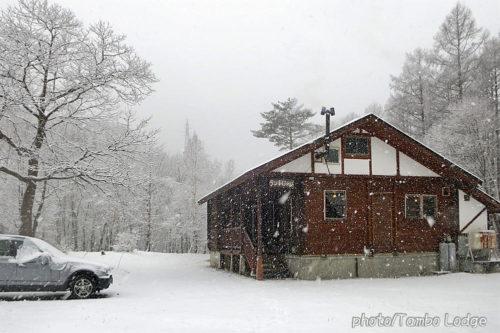 雪の季節到来!!
