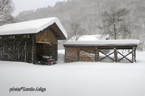 今日は久しぶりの大雪
