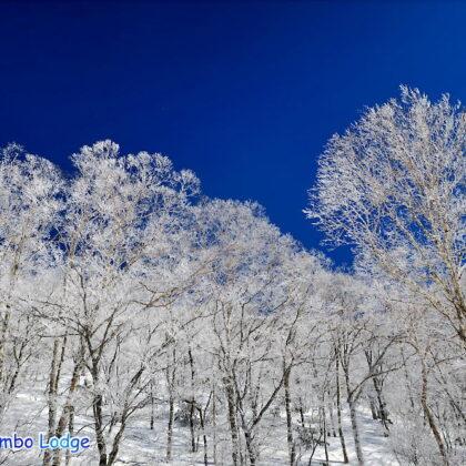 山頂の樹氷&スキー