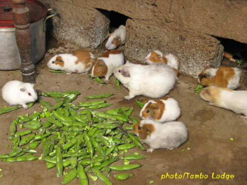 アンデスの食の原点、アンデス農家のご馳走