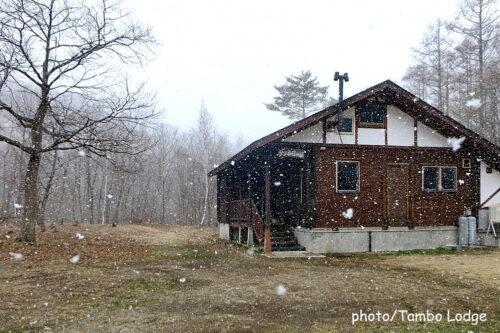 季節外れの雪にびっくり!!