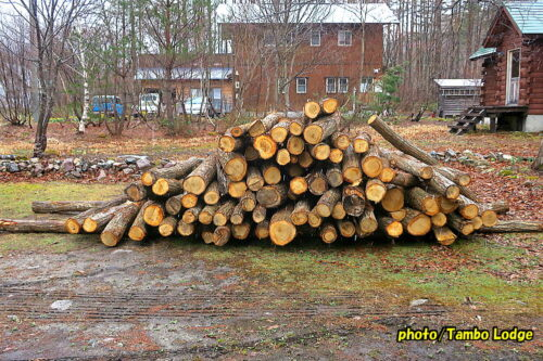 2021年薪用の原木が到着
