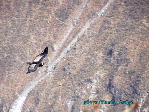 コンドルは飛んで行く(El condor pasa)