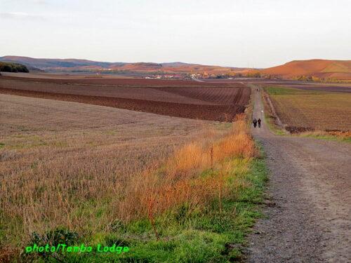 巡礼11日目(Grañon ⇒ Villafranca montes de oca)28.5㎞ レオン州へ入る