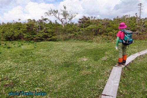 春の花咲く田代山に登る
