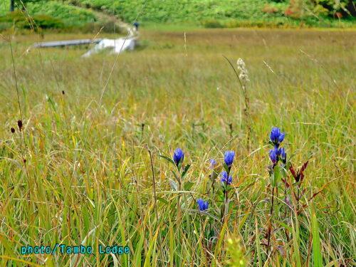 秋の始まりの尾瀬沼を一周