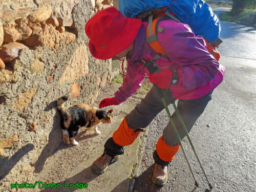 巡礼8日目(Ponferrada ⇒ Villafranca del bierzo)24㎞ 振り返ると峠は雪